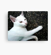 AFFECTION Canvas Print