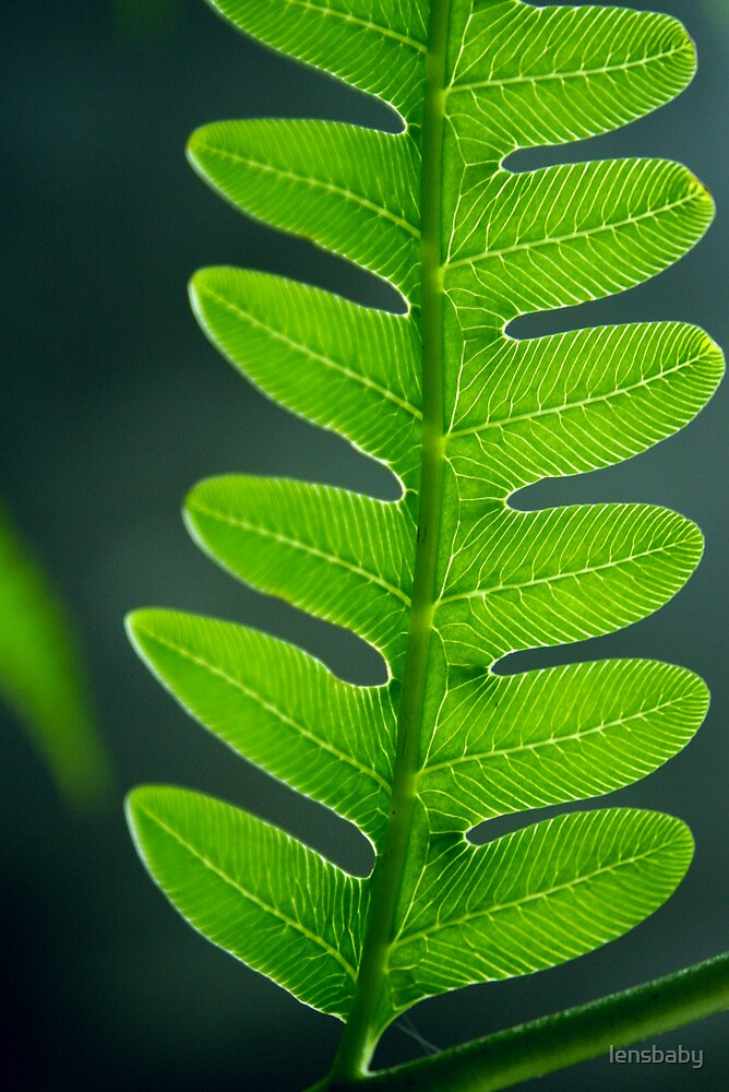 fern fractal pattern by lensbaby