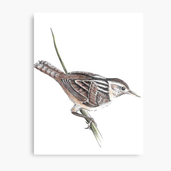 Marsh Wren Metal Print