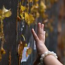 Reaching For Autumn by paulmcardle