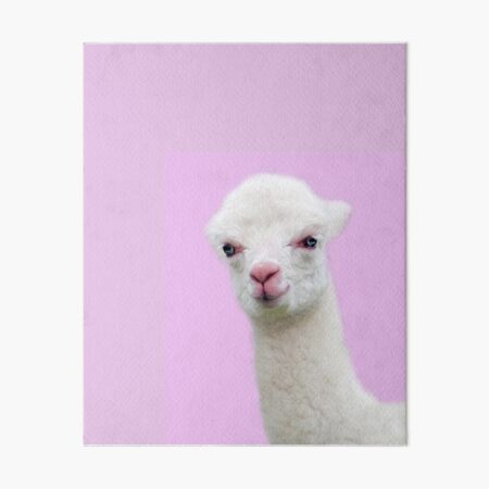 Baby Alpaca with pink background Art Board Print