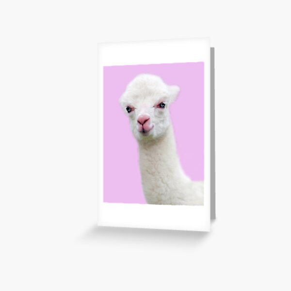 Baby Alpaca with pink background Greeting Card