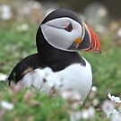 Flower Puffin by ApeArt