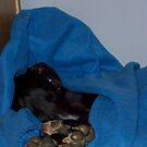 Snug as a bug. by diafol-dee