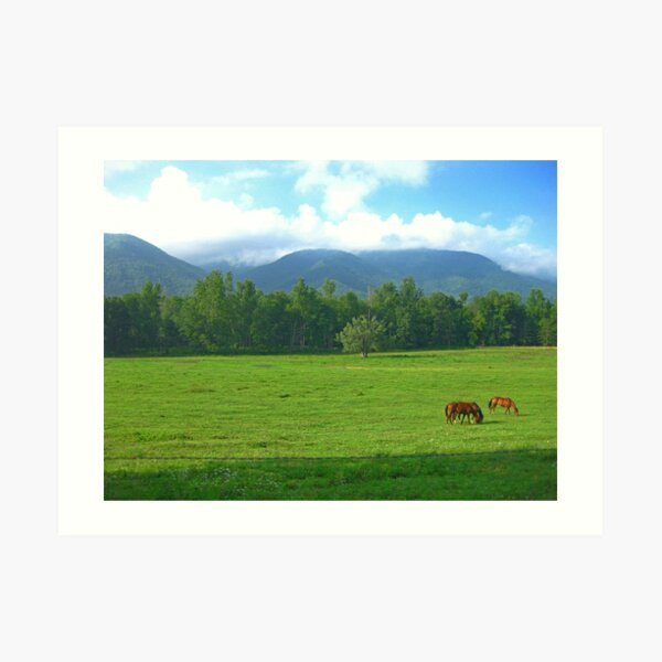 Horses in the Valley - Cades Cove Art Print