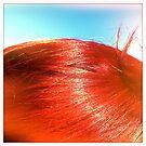 Red by Richard Pitman