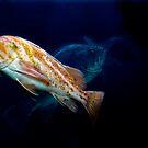 Rockfish #2 by mogue