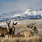 Ramshorn - What A Setting for These Blacktail Deer by A.M. Ruttle