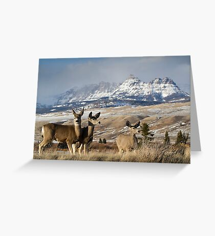 Ramshorn - What A Setting for These Blacktail Deer Greeting Card