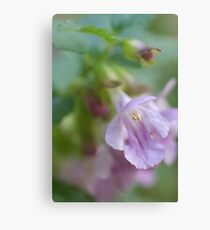 Showy Calamint Canvas Print