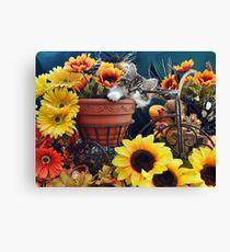 Venus ~ Cute Kitty Cat Kitten in Fall Colors Canvas Print