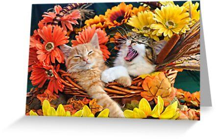 Venus & Di Milo ~ Cute Kitty Cat Kittens in Fall Colors by Chantal PhotoPix
