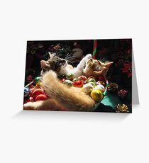 Venus & Di Milo ~ Serenity ~ Christmas Kittens Greeting Card