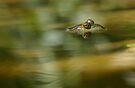 Frog Reflecting, Dunrobin, Ontario by Debbie Pinard