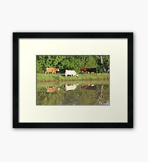 Four cows by pond, taken with a canon rebel t3i. taken in southeast missouri Framed Print