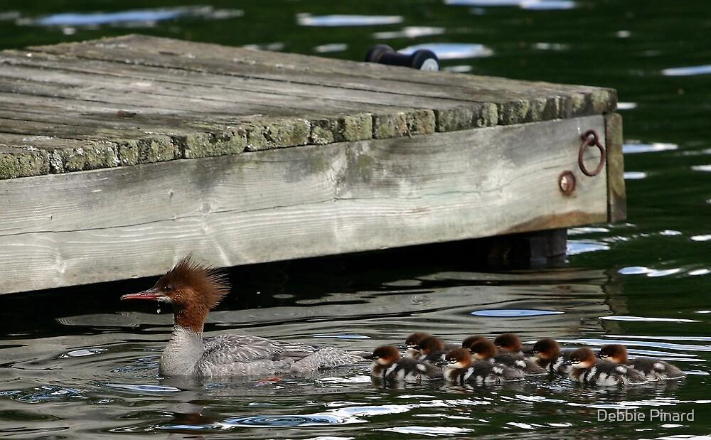 Merganser Duck and Babies - Lac Sam Quebec by Debbie Pinard