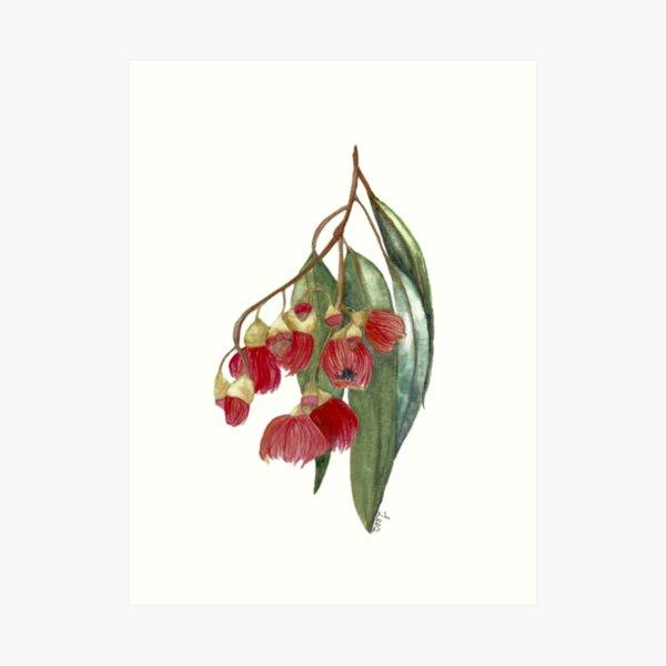 Watercolour Gum tree Art Print