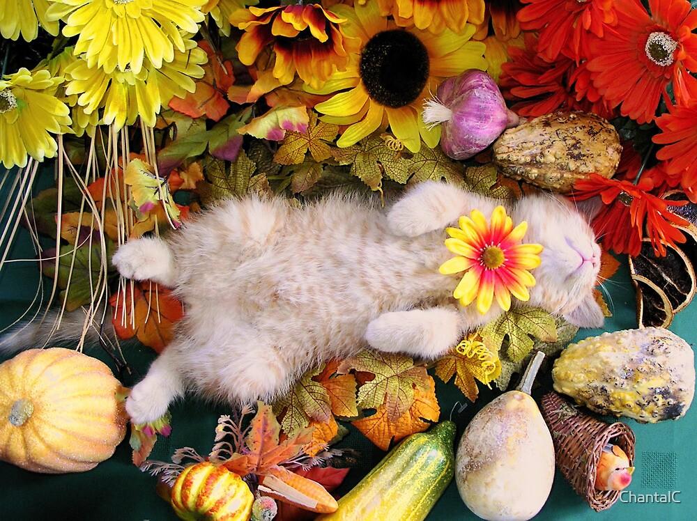 Di Milo ~ Fall Harvest ~ Cute Kitty Cat Kitten in Fall Colors by Chantal PhotoPix
