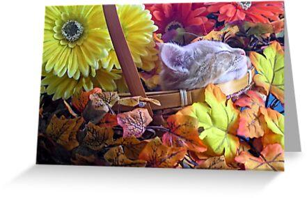Di Milo ~ Chin-up ~ Fall Kitty Cat Kitten in a Basket of Fall Flowers by Chantal PhotoPix