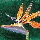 Bird of Paradise Flower by jsalozzo