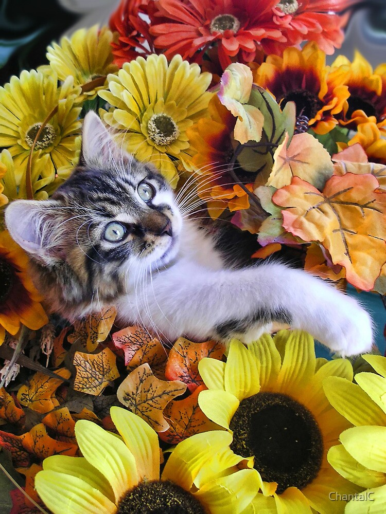 Venus ~ Cute Kitty Cat Kitten in Decorative Fall Colors by Chantal PhotoPix
