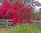 Bougainvillea and Daisies by Margaret  Hyde