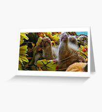 Di Milo ~ Belly up ~ Fall Kitten Greeting Card