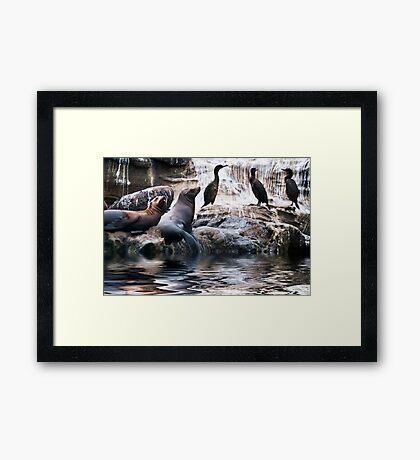Bird Poop Rock Framed Print