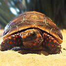 Hello Mr. Turtle  by queenxtc