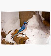 Winter Blue Poster