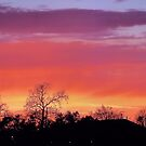 Sunsets and Silhouettes by Brian Gaynor