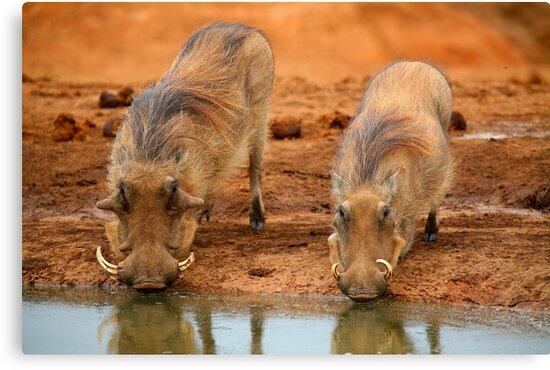 Warthogs At Waterhole by naturalnomad
