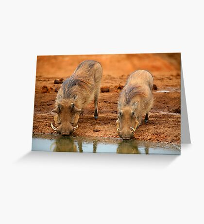 Warthogs At Waterhole Greeting Card