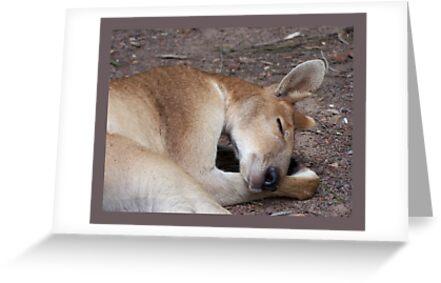 Aussie Icon - Buck by jono johnson