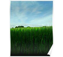 Grassy view Poster