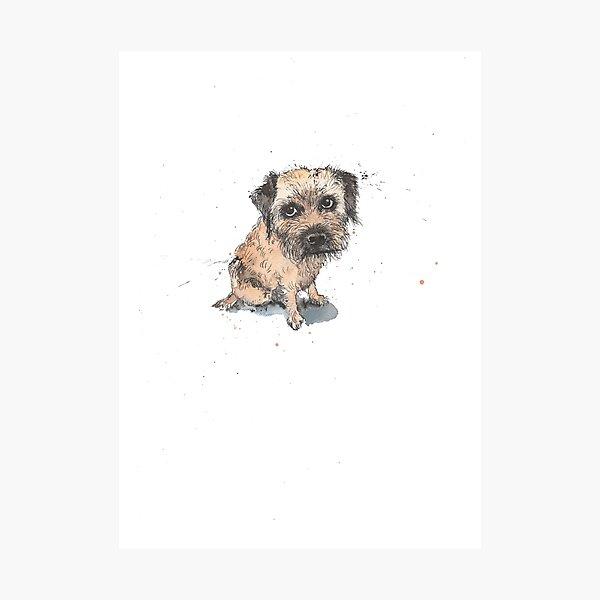 Sheepish Border Terrier Photographic Print