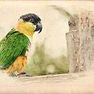 Parrot Sketch by Foxfire