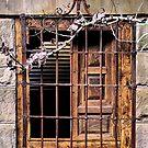 Garden Window - Yengo Estate - Mt Wilson NSW by Bev Woodman