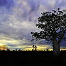 Sunset behind Boab Trees at Fitzroy Crossing by Alwyn Simple