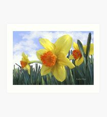 Sunlight on the Daffodils Art Print