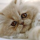 You had me at 'meow'  by micklyn
