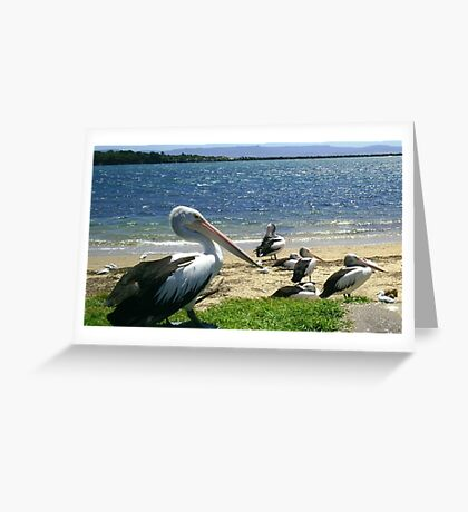 Pelicans on the beach Greeting Card