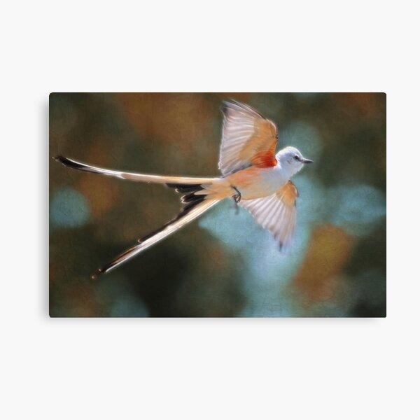 Aerial Ballet of the Scissortail  Canvas Print