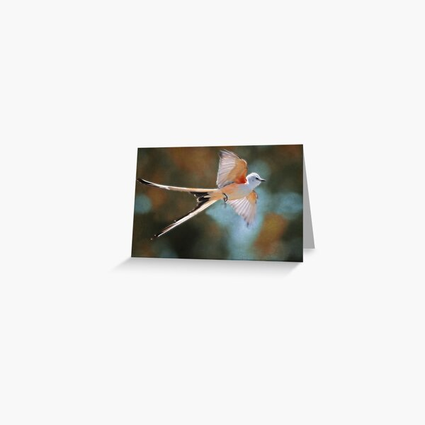 Aerial Ballet of the Scissortail  Greeting Card