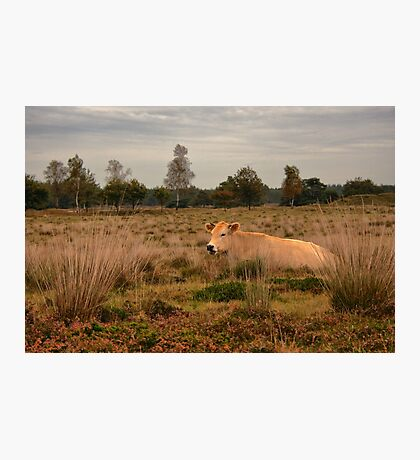Its a Cow Photographic Print