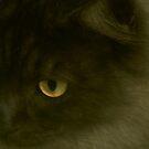 Study of a cat by iamelmana