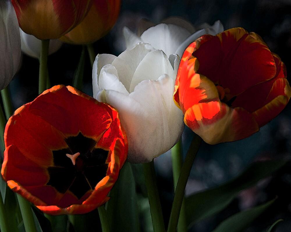 Tulips in Watercolour by David Morrison