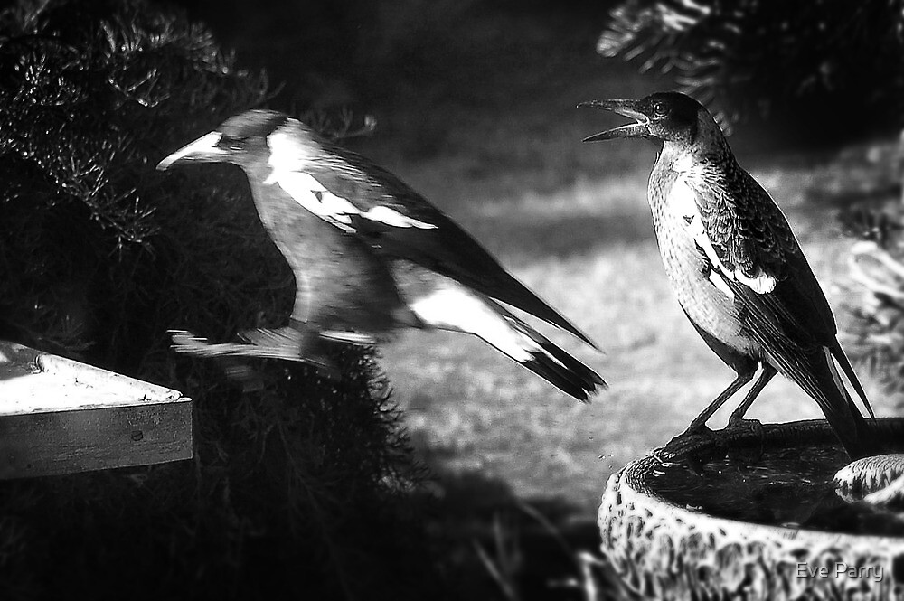 Jump Now!!!! (Magpies) by Eve Parry
