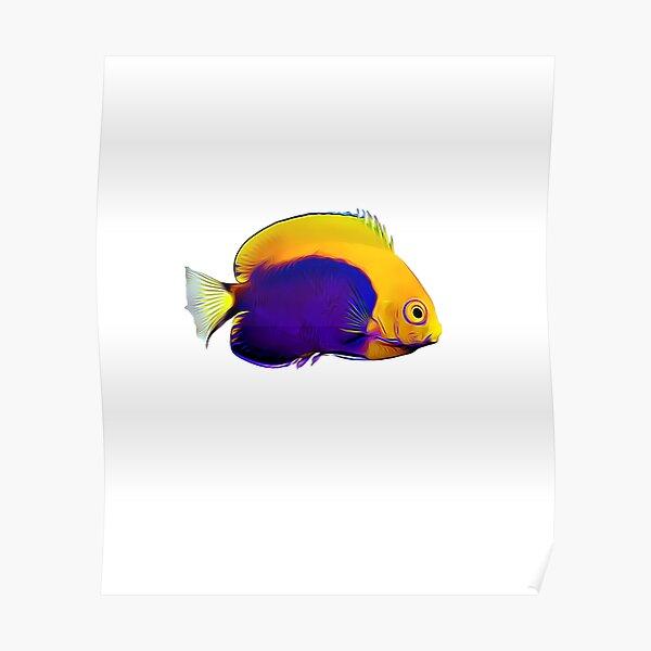 Flameback Angelfish saltwater reef fish Poster