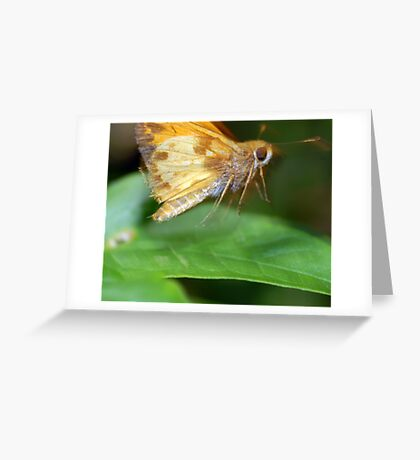 Moth On The Move Greeting Card